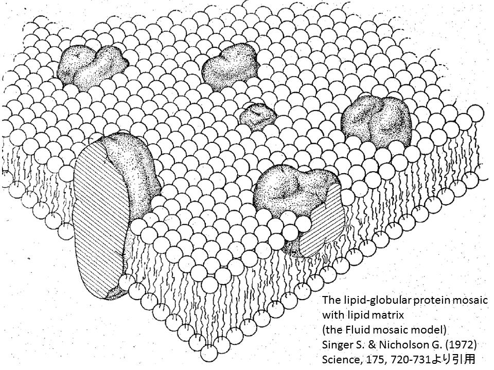生命、細胞、生体膜