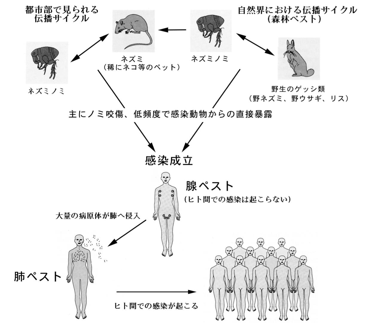 ウイルス 天然 痘